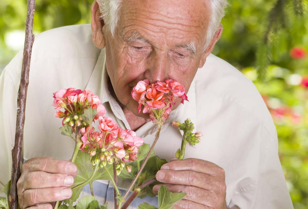 Sense of Smell and Parkinson's Disease